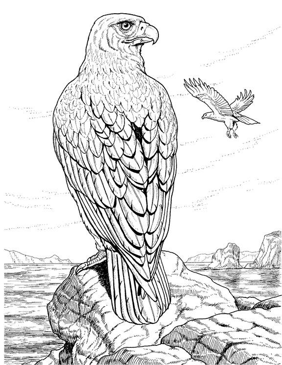 Eagle 277 Animals Printable Coloring Pages
