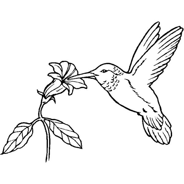 - Humming-bird #3786 (Animals) – Printable Coloring Pages