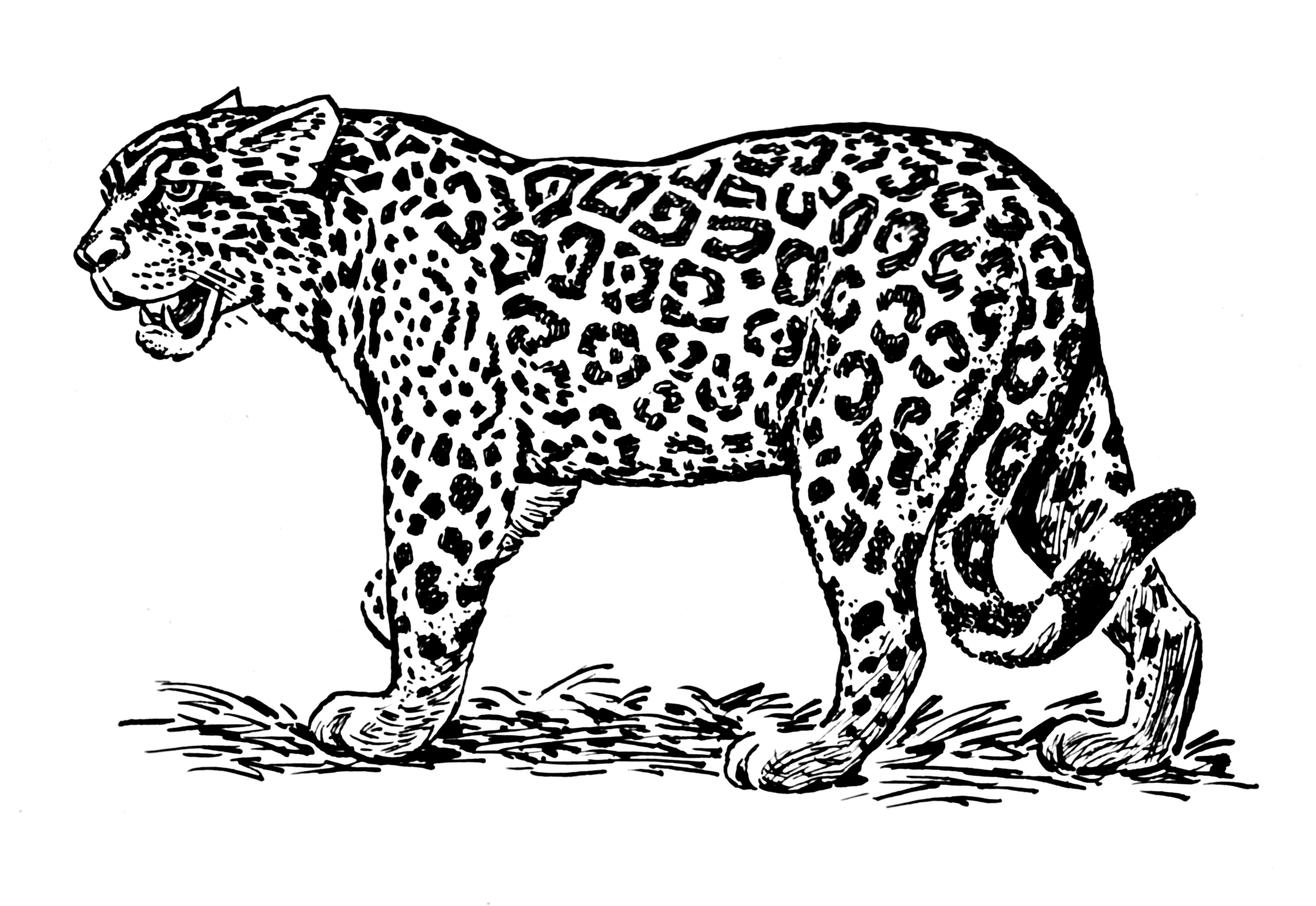 Jaguar 9013 Animals Printable Coloring Pages
