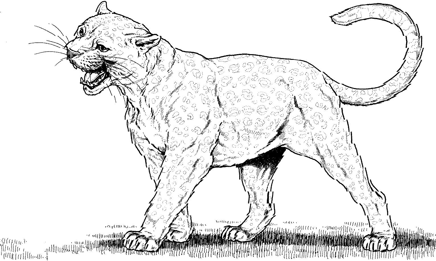 panther (animals) - printable coloring pages
