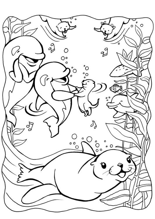 Seal 16318 Animals Printable Coloring Pages