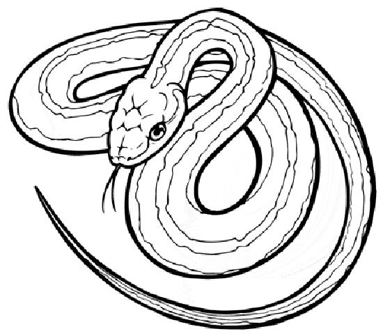 Snake #14361 (Animals) – Printable Coloring Pages