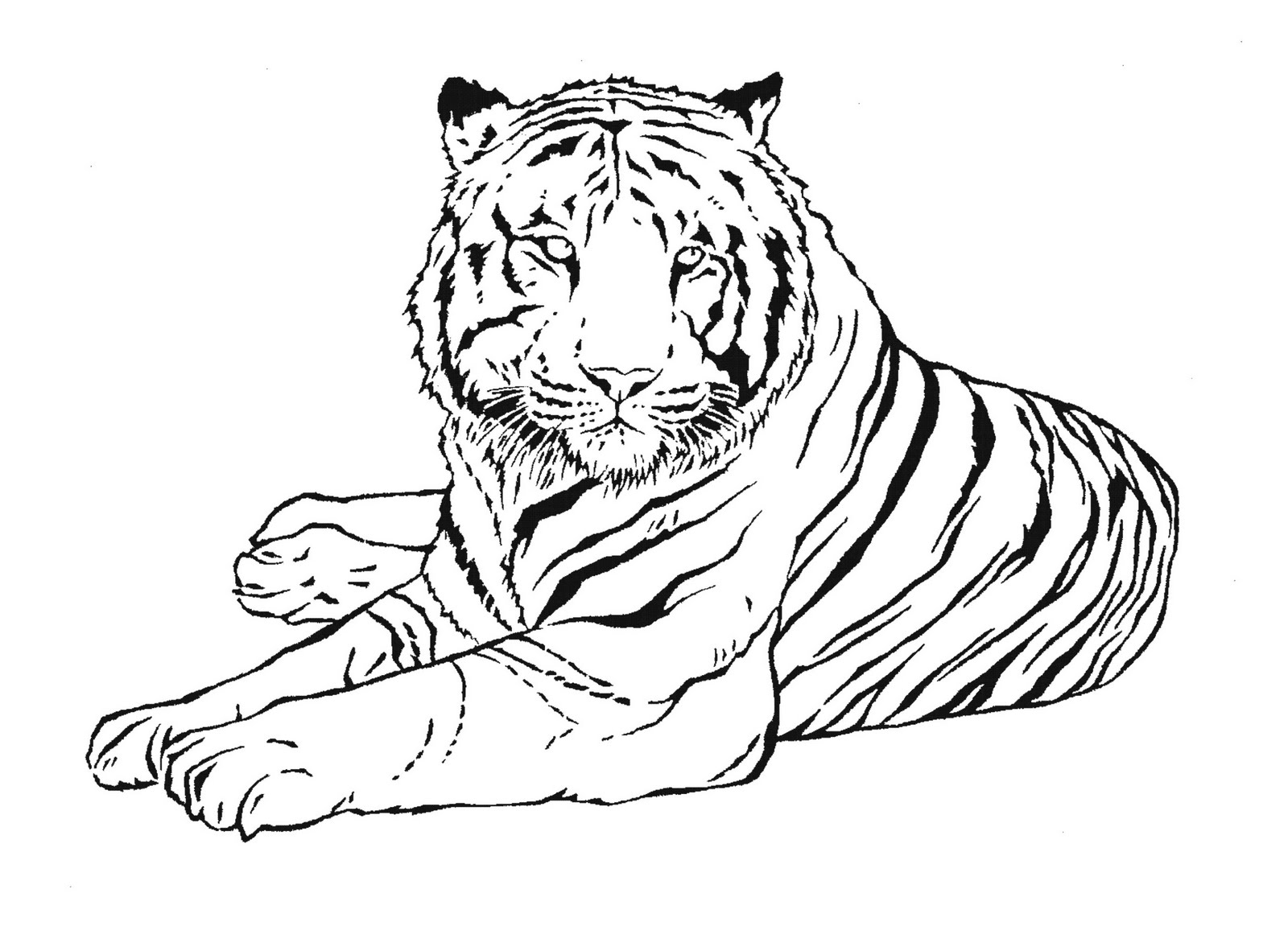 tiger (animals) - printable coloring pages