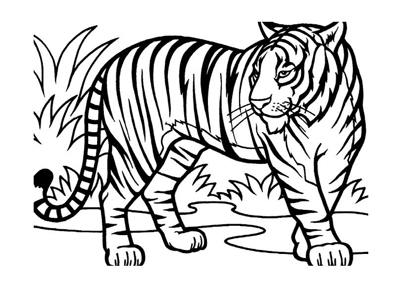 - Wild / Jungle Animals #21114 (Animals) – Printable Coloring Pages