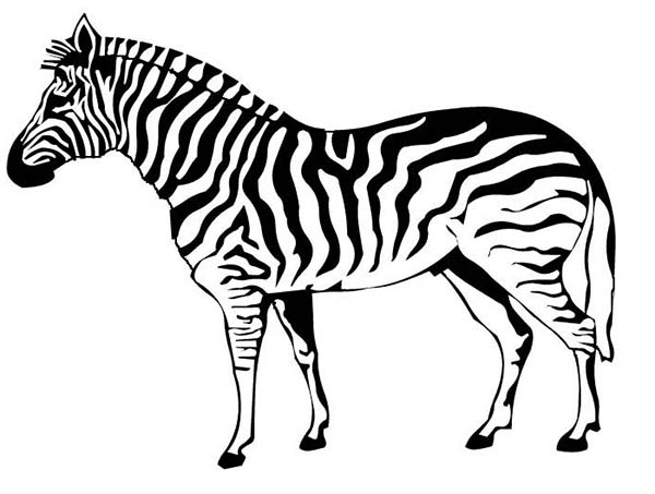 - Zebra #12963 (Animals) – Printable Coloring Pages
