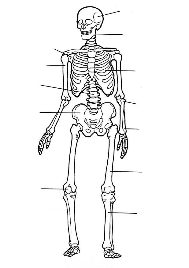 Skeleton #147522 (Characters) – Printable Coloring Pages