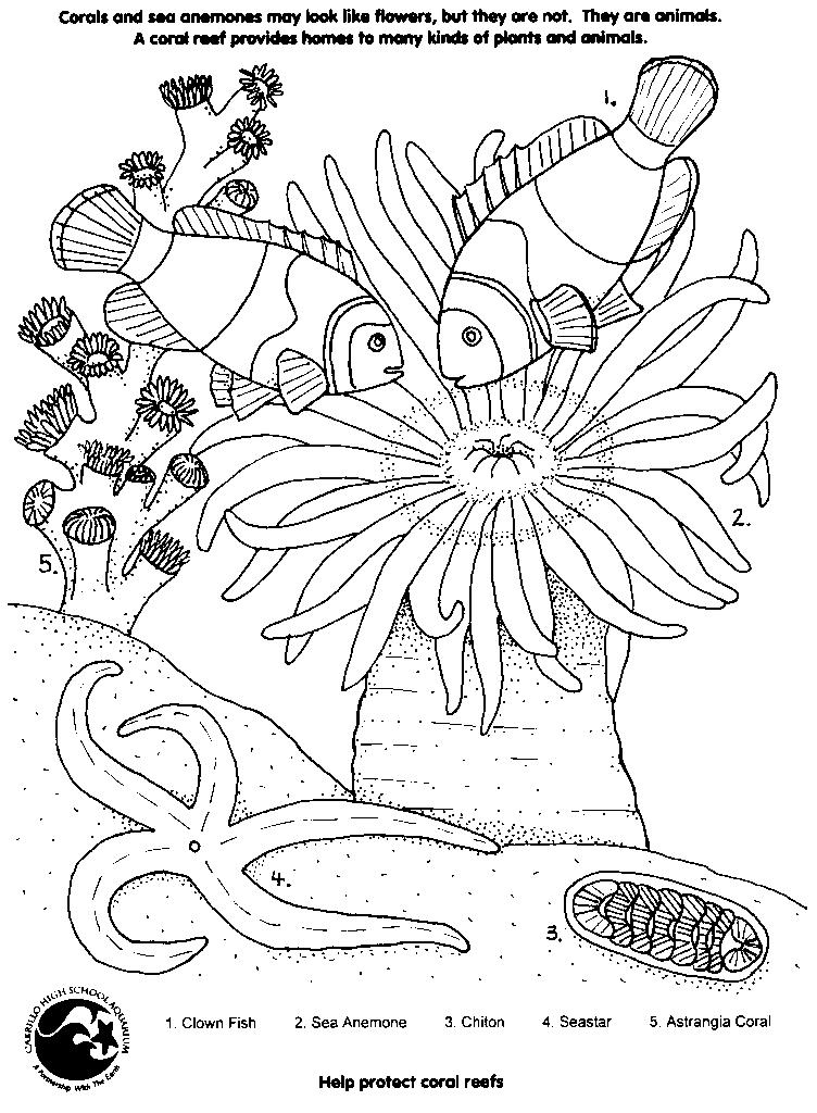 - Coral #162901 (Nature) – Printable Coloring Pages