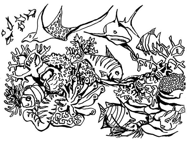 Coral #163066 (Nature) – Printable Coloring Pages