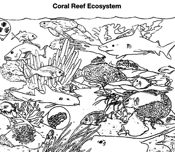 - Coral #163088 (Nature) – Printable Coloring Pages