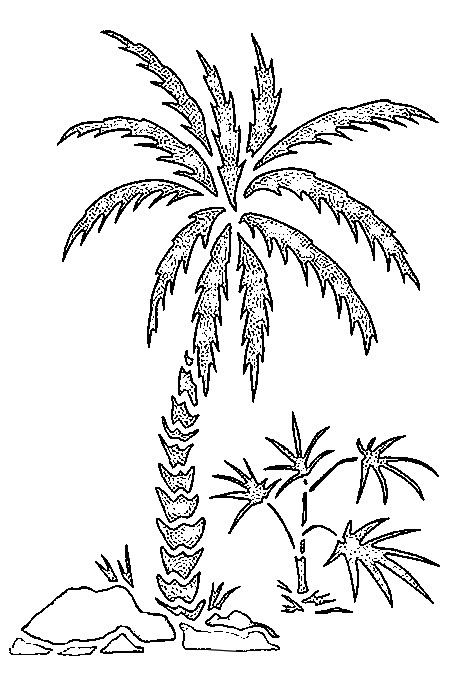 Palm tree (Nature) - Printable coloring pages