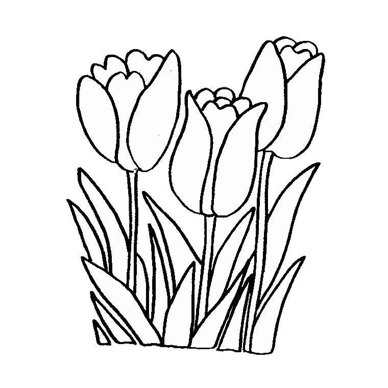 Tulip (Nature) - Page 3 - Printable coloring pages