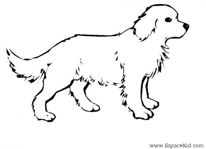 Coloring Pages: Dogs Coloring Pages Free and Printable | Free ... | 682x550