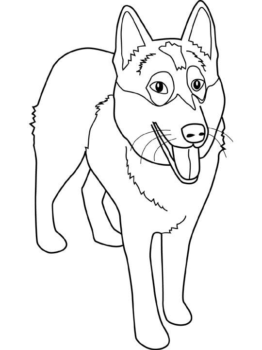 Coloring Page Dog Animals 30
